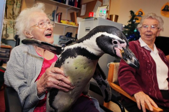 39280daa8f95 Pringle and Charlie the penguins visited a care home to cuddle ...
