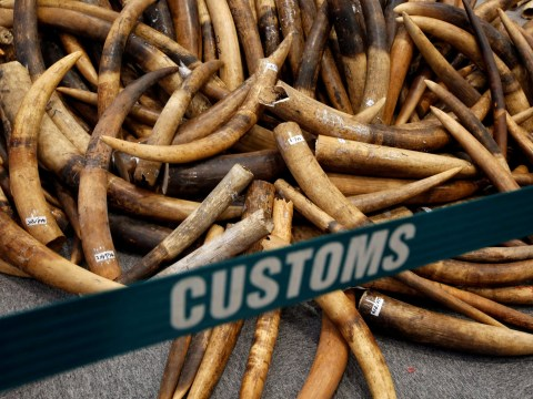 China finally shuts down its government-sanctioned ivory trade