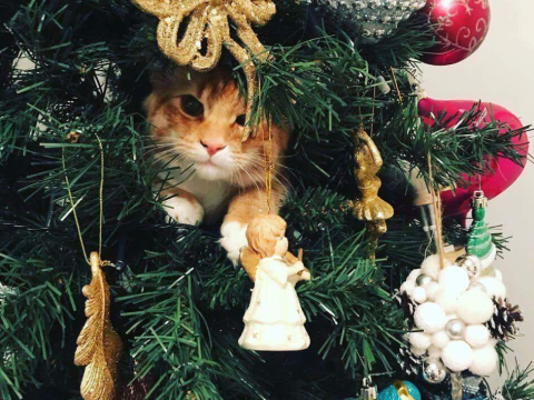 It's probably too late but here's how to protect your Christmas tree from your cat