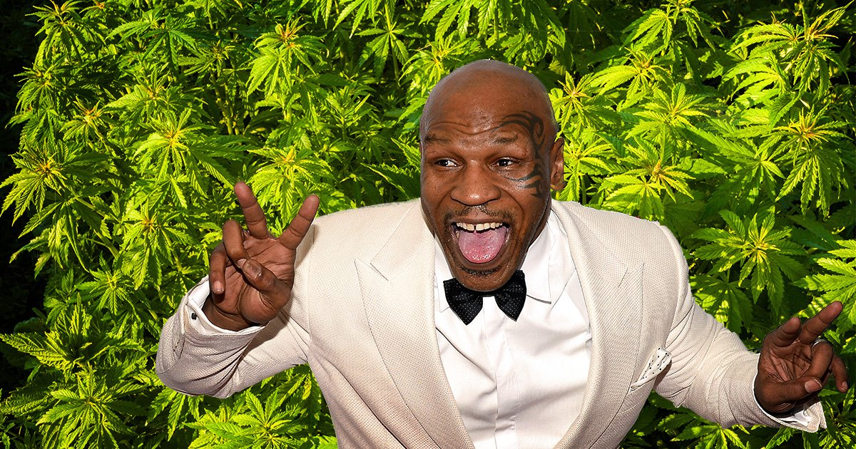 Mike Tyson flying high as he is set to open 40-acre cannabis resort