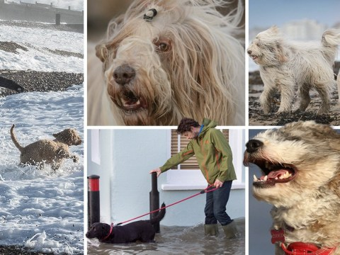 How dogs have been coping with storm Eleanor