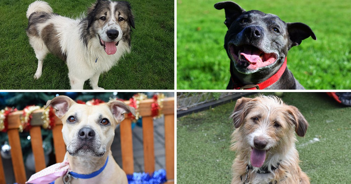 Battersea launches appeal to rehome their most unwanted dogs