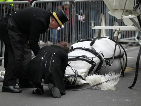 Horse collapses in street during London's New Year's Day Parade