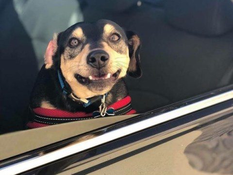 Bagel shop worker photographs dogs keen for carbs at her drive-thru