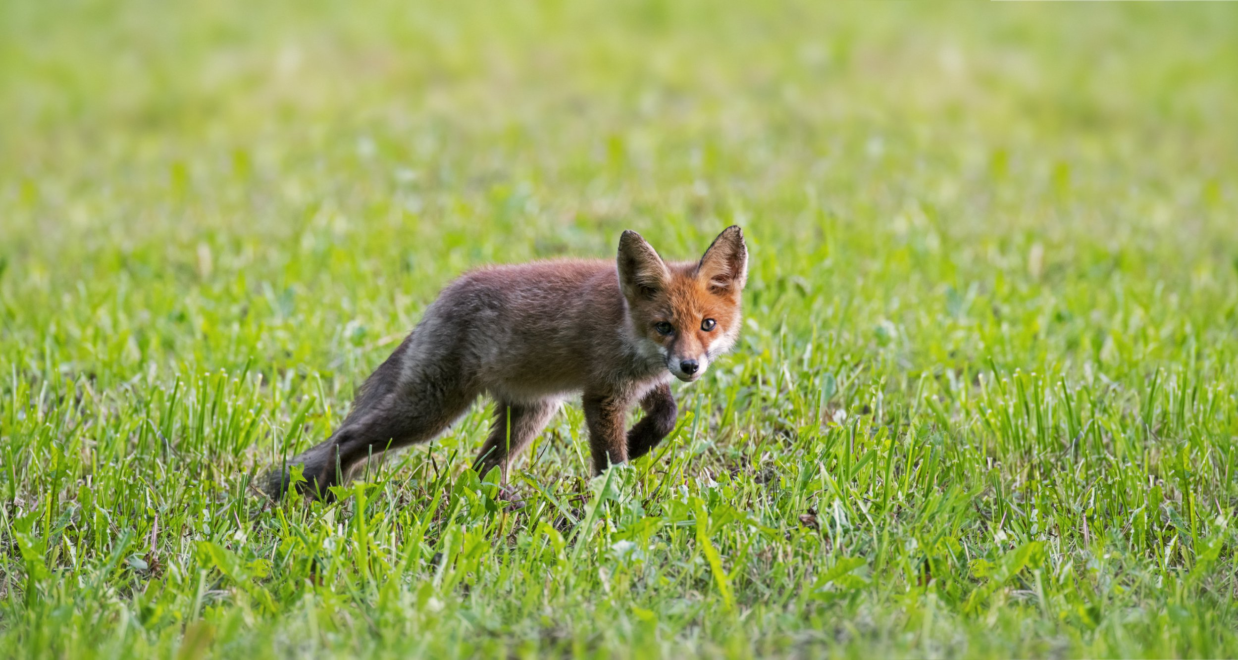 There is not going to be a vote on the hunting ban after all