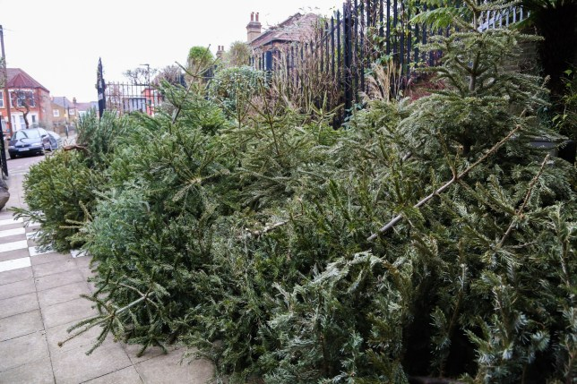 People are chucking Christmas trees in the street (but here's what you should really do) | Metro ...