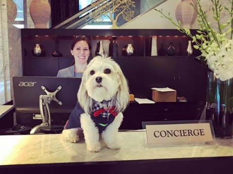 You can order a dog on room service at this pet-friendly hotel