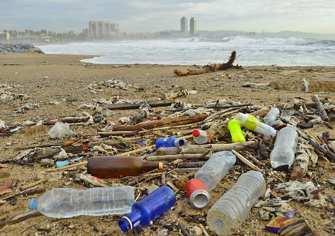 How many plastic bottles are wasted every day?