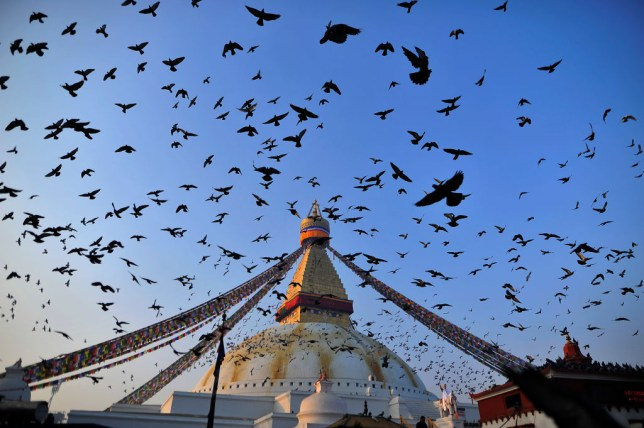 pigeons above boudhanath stupa