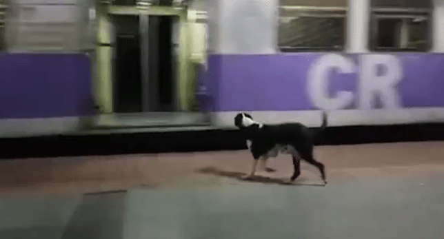 Dog waiting for train in Mumbai, India