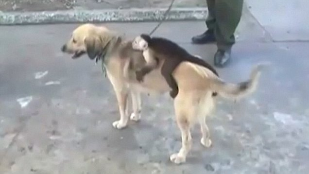 Dog adopts monkey after losing entire litter of puppies