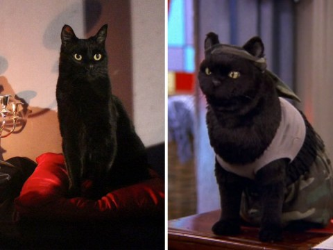 Netflix's Riverdale Sabrina spin-off reveals its Salem the cat and it's actually a real animal this time