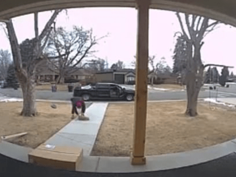 Brazen dognapper steals family pet from front yard