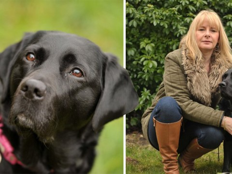 Blind woman 'beside herself with grief' after guide dog attacked six separate times