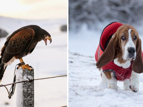 What to do to help animals during freezing weather and snow
