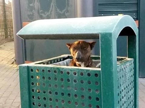 Shivering puppy found inside a park bin in sub-zero temperatures