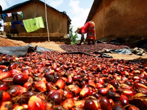 Unilever releases details of its entire palm oil supply chain