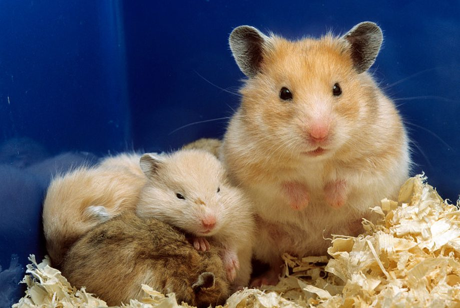 Words... live hamster cam already