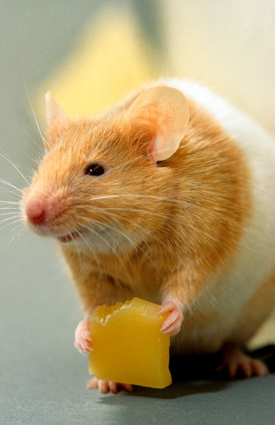 Where do hamsters live in the wild? | Metro News
