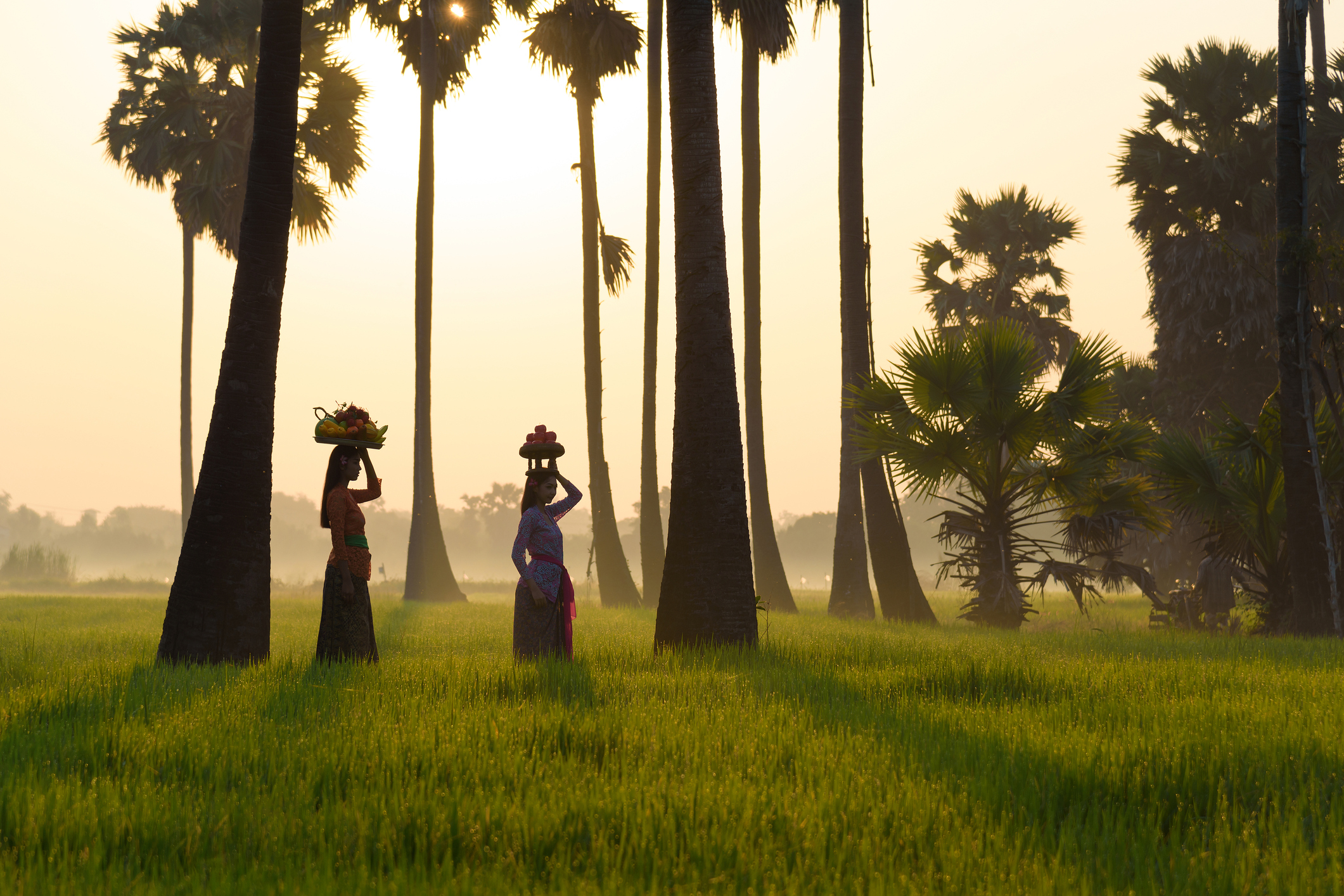 Asian woman working walk in rice field in morning at bali indonesia.