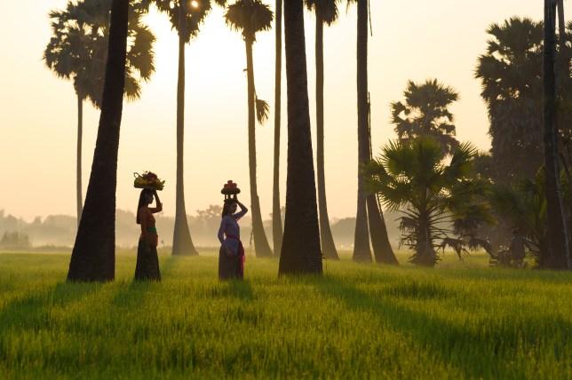 Asian woman working walk in rice field in morning at bali indonesia.