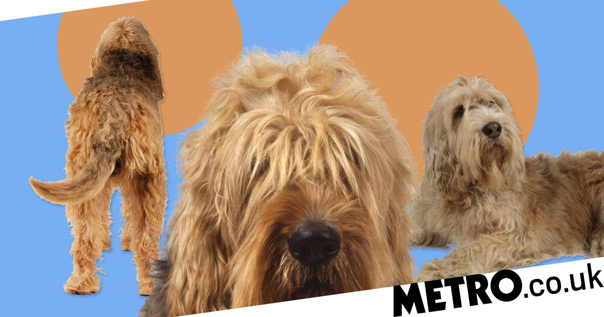 These Are The Most Endangered Dog Breeds In The Uk Metro News
