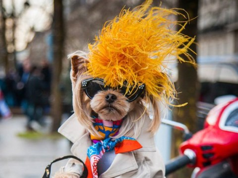 Lola Sunshine the dog has better clothes than you and it's all designer