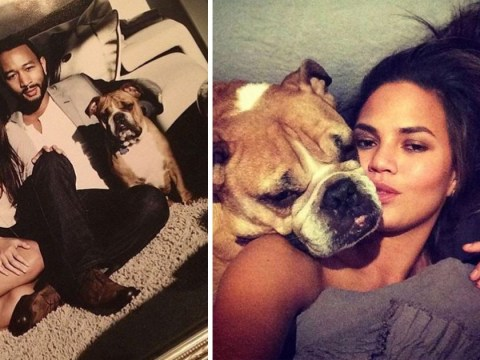 Chrissy Teigen issues heartbreaking tribute to beloved dog Puddy as he passes away