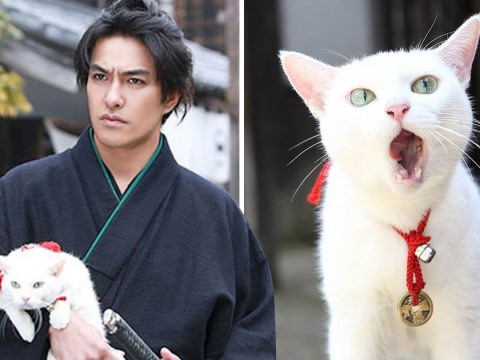 There's a show about a Japanese assassin and the cute cat he couldn't kill that you need in you life