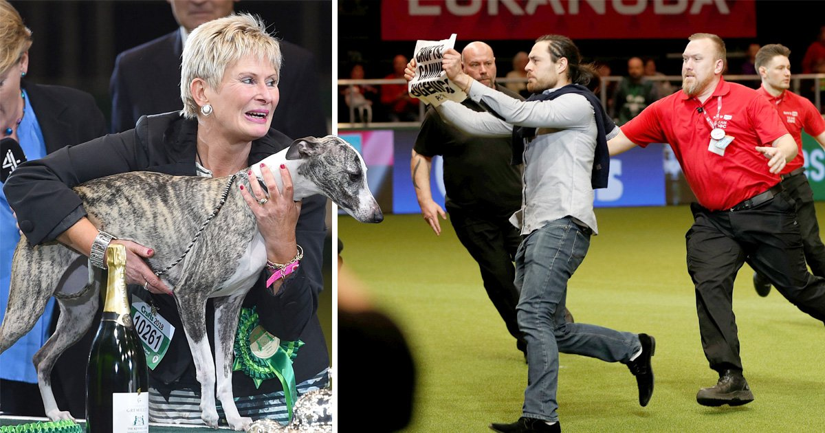 Drama at Crufts as protesters storm arena during presentation for best in show