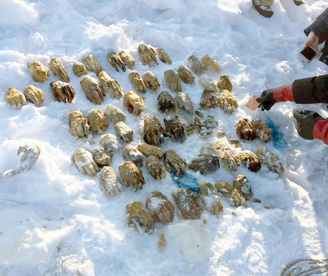 54 severed hands that washed up in a bag 'not suspicious', say Russian police