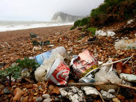 You can now help clean up beaches by tagging litter in online photos
