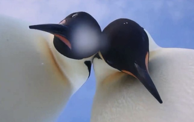 Penguins Find Their Moment In The Spotlight With A Video 'Selfie'