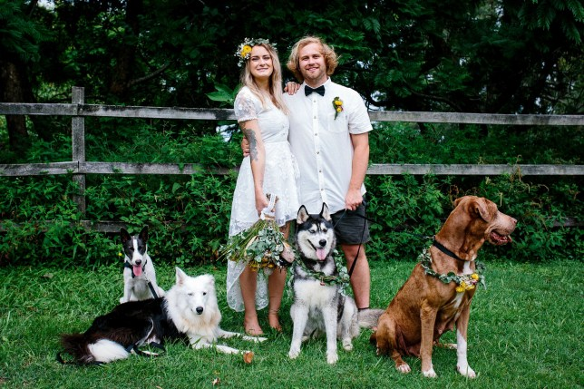 ***MANDATORY BYLINE***PIC FROM Erin Simpson / E.L Simpson Photography/ Caters News - (PICTURED: Sam and Reece Blanch, from Brisbane, Australia, with their dogs on their wedding day in Geb 2018) - An animal-mad couple managed to tie the knot for just 1,700 by letting their pet pooch film their wedding video with adorable results. Dog lovers Sam and Reece Blanch, from Brisbane, Australia, married in front of 50 guests in a picturesque Airbnb in Newrybar, New South Wales, last month.The thrifty pair, both 26, are saving to set up their own animal shelter so ensured the entire event cost just ,000 AUD (1,700) by enlisting the help of their five rescue dogs.SEE CATERS COPY