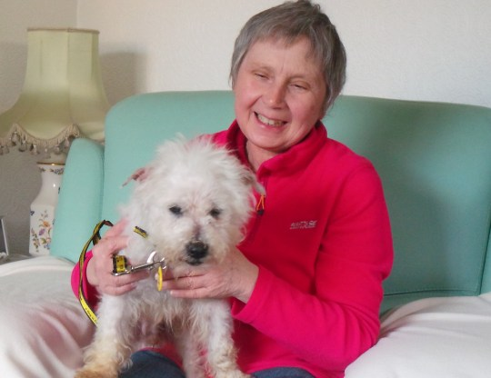 Snowy, Britain's oldest rescue dog moves to a retirement