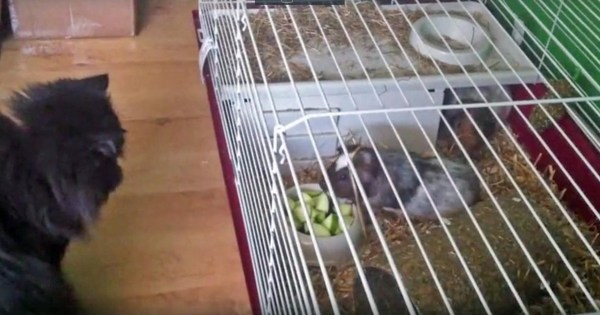 Russian spy Sergei Skripal???s pet cat and guinea pigs are taken away for testsCredit: Facebook