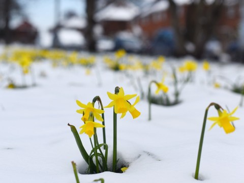 Spring is making a comeback, but the bad weather isn't gone for good