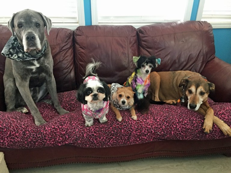 Stephanie loves all her dogs equally(Collect/PA Real Life)