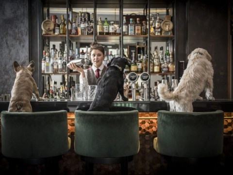 Cocktail evenings just for dogs are coming to a bar in London