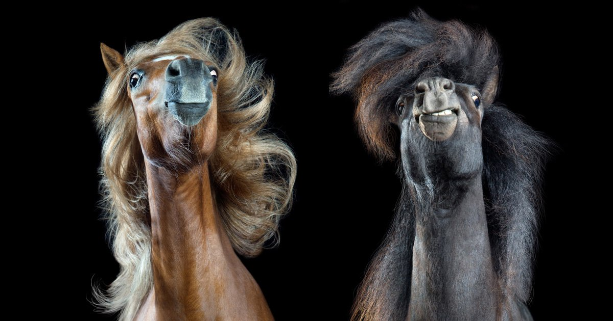 These pics of horses tossing their manes are giving us life