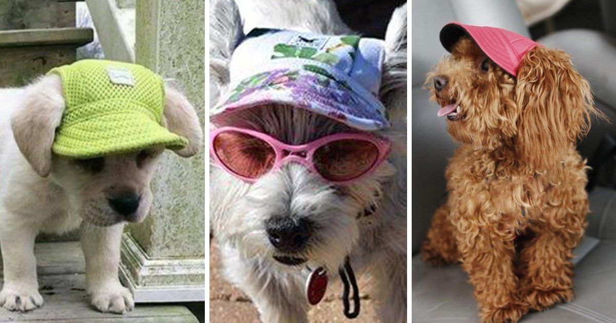 Treat your precious puppy to a dog-sized sunhat