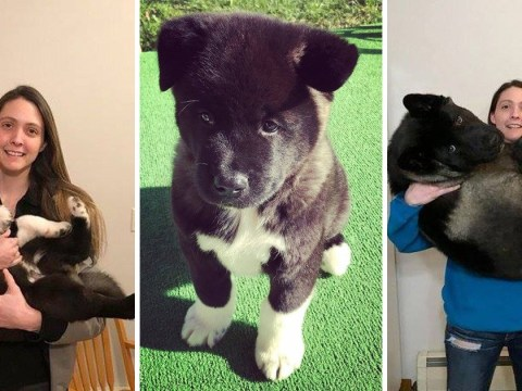 Hilarious photos show this dog's incredible six month growth spurt