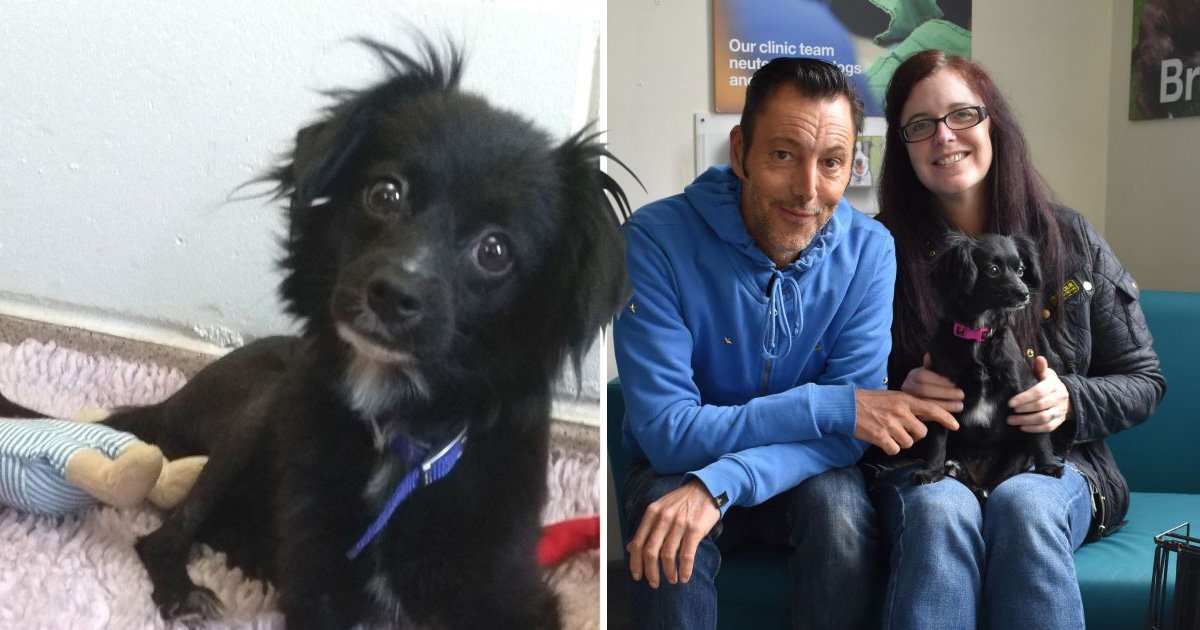Scottish couple travel 400 miles to adopt their second Battersea dog