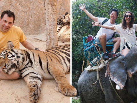 Why you shouldn't ride elephants or take selfies with tigers this summer