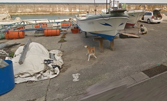 Dog spotted on Google Maps chasing the Street View car down