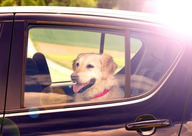 Dog inside a hot car (Picture: PK-Photos/Getty)