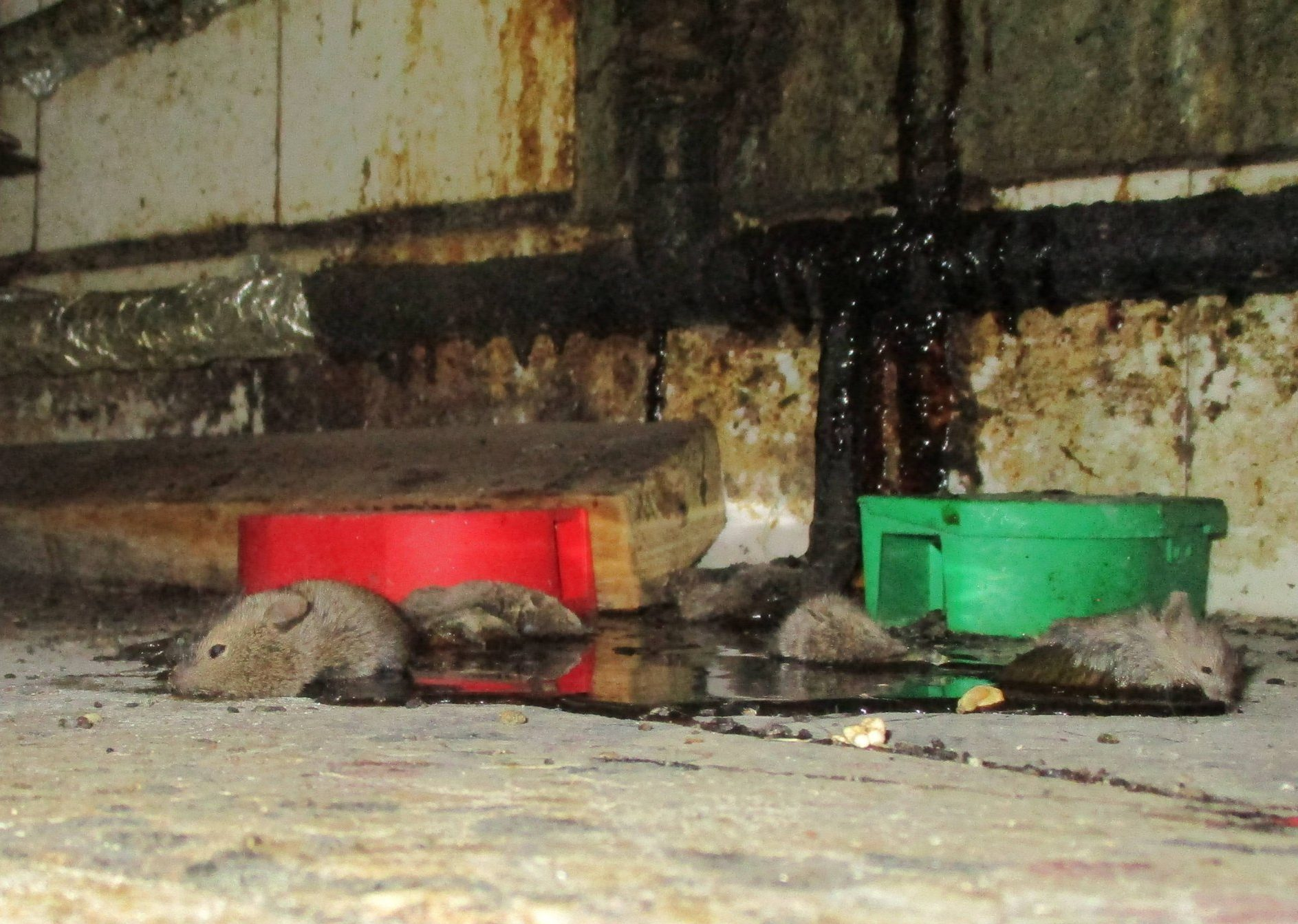 WALTHAMSTOW, LONDON These horrific scenes from a rodent-infested London pizzeria reveal a real Hell???s Kitchen. Franco Pizza in Hoe Street, Walthamstow, was closed by food hygiene chiefs (Credit: Pen News) (Pen News ??25, ??15, ??10 online) (Contact editor@pennews.co.uk/07595759112)