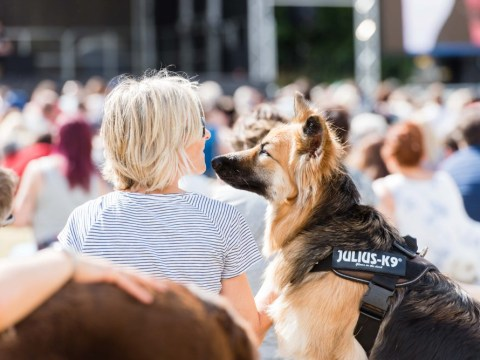 DogFest is here to fill the Glastonbury-shaped hole in your summer