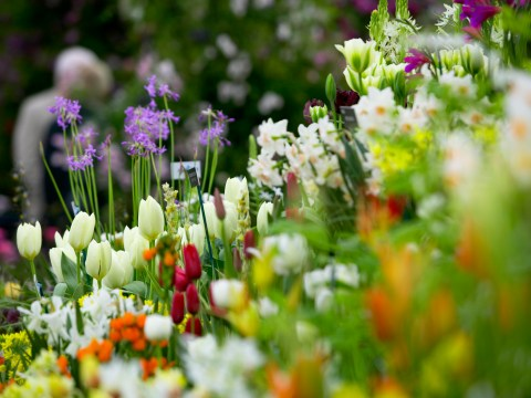 Royal Chelsea Flower Show tickets, location, what to wear, opening times and when does it start?