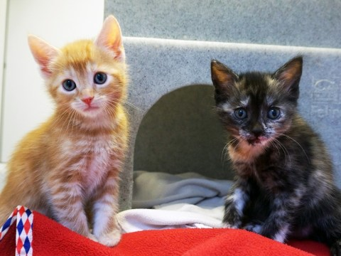 Some monster dumped these royal kittens in a box but now they can be yours